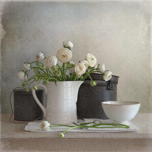 Ranunculus – Tineke Stoffels – Art center Hoorn